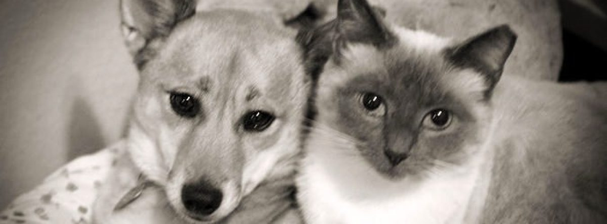 Pet Behaviorist's Cat and Dog