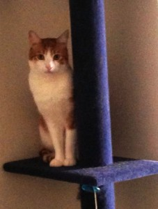 Pips been climbing his tree more lately. Thank you ! :) Amy B., Falls Church VA